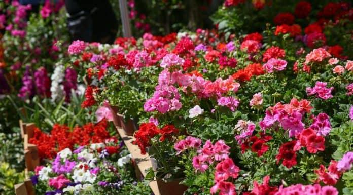 Bayındır Çiçek Festivali Nerede, Nasıl Gidilir